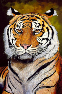 TheSultan-Sumatran Tiger