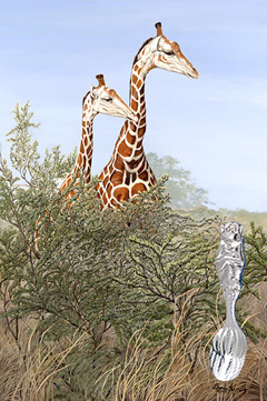 Look! Tourists giraffes with Monkey motif silverSpoon