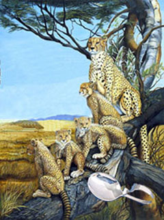 Quality Time-Cheetahs, fine art print, with Strling Silver Bent Handle Baby Spoon