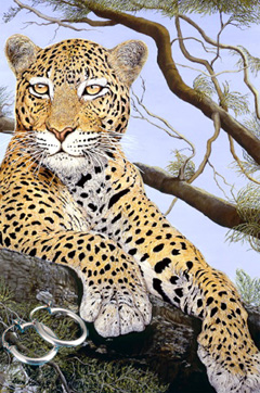 The Sentinel-Leopard Fine Art Print on Canvas with  the Sterling Silver Tubular Hoop Earrings