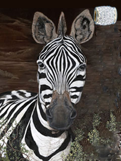 Up Close, Personal-Zebra, giclee print on canvas, with Gold Barrel Slide Pendant studded with hand set CZs