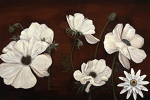 Anemones on Burgundy Black Fine Art Print on Canvas with White Porcelain Enamel Chrysanthemum Pin/pendant