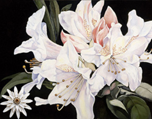 White Rhododendrun-Flowers Fine Art Print on Canvas with White Porcelain Enamel Chrysanthemum Pin/pendant